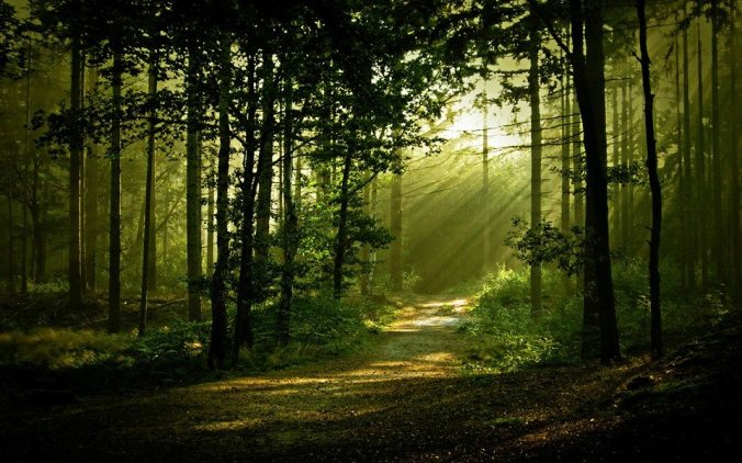 JESSE FOREST